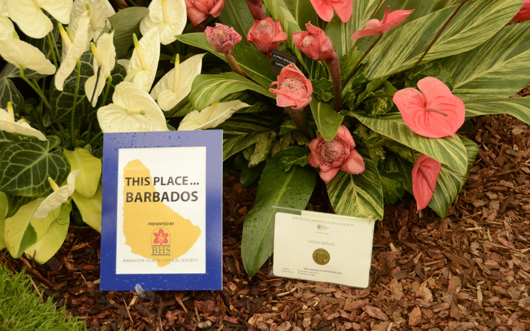 Invitation to Slide Show of BHS Exhibit at the 2016 Chelsea Flower Show