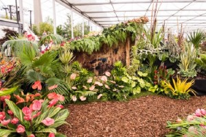 barbados-chelsea-flower-show-2